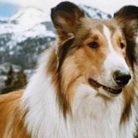 Ann Coulter -- Lassie, Come Home